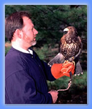 Harris Hawk & Falconer